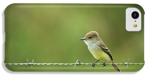 Flycatcher iPhone 5c Case - Galapagos Flycatcher (myiarchus by Pete Oxford
