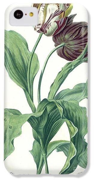 Garden iPhone 5c Case - Garden Tulip by Gerard van Spaendonck