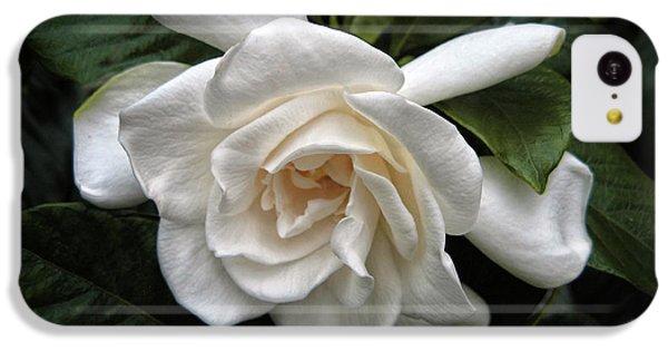 Gardenia IPhone 5c Case by Jessica Jenney