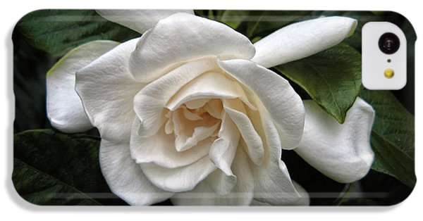 Gardenia IPhone 5c Case