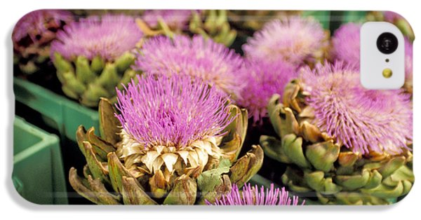 Germany Aachen Munsterplatz Artichoke Flowers IPhone 5c Case by Anonymous