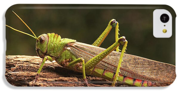 Grasshopper iPhone 5c Case - Giant Grasshopper by Ktsdesign