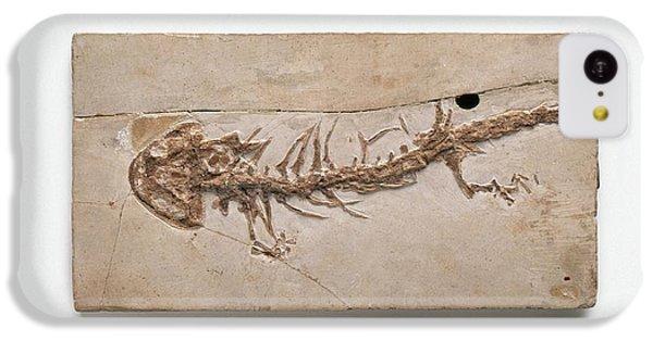 Salamanders iPhone 5c Case - Giant Salamander Fossil by Dorling Kindersley/uig