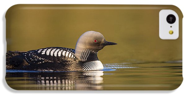 Glassy Waters And A Pacific Loon IPhone 5c Case by Tim Grams