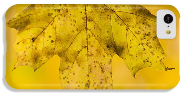 IPhone 5c Case featuring the photograph Golden Maple Leaf by Sebastian Musial