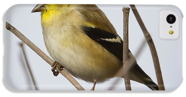 IPhone 5c Case featuring the photograph Goldfinch In It's Winter Coat by Ricky L Jones