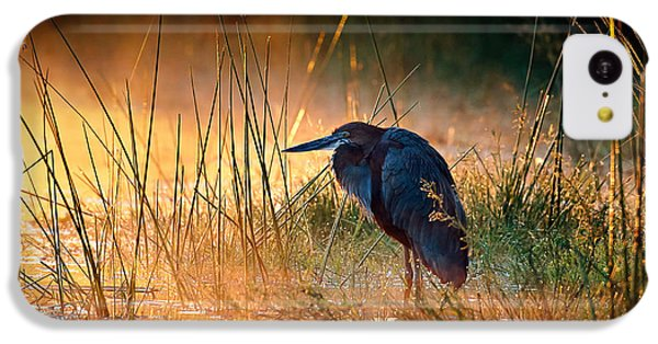 Heron iPhone 5c Case - Goliath Heron With Sunrise Over Misty River by Johan Swanepoel