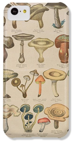 Good And Bad Mushrooms IPhone 5c Case by French School
