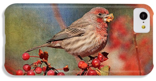 Finch iPhone 5c Case - Good Grief   These Berries Sure Are Messy  by Donna Kennedy