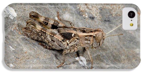 Grasshopper Calliptamus Barbarus Juvenile IPhone 5c Case by Nigel Downer