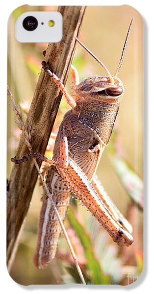 Grasshopper In The Marsh IPhone 5c Case by Carol Groenen