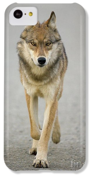 Gray Wolf Denali National Park Alaska IPhone 5c Case