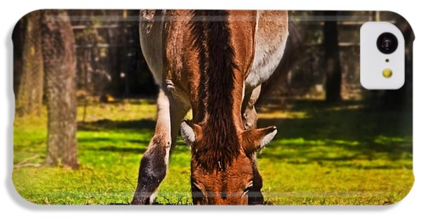 Grazing With An Attitude IPhone 5c Case by Miroslava Jurcik
