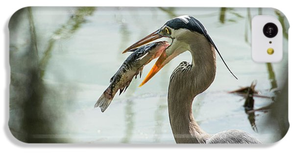 Catfish iPhone 5c Case - Great Blue Heron With Fish In Mouth by Sheila Haddad