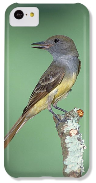 Great Crested Flycatcher Myiarchus IPhone 5c Case