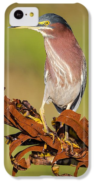 Green Heron IPhone 5c Case