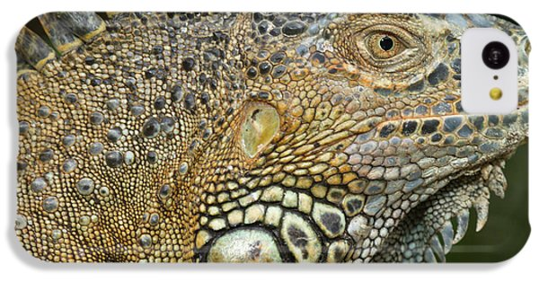 Belize iPhone 5c Case - Green Iguana (iguana Iguana by William Sutton