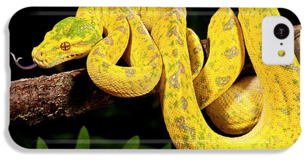 Python iPhone 5c Case - Green Tree Python, Morelia by David Northcott