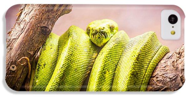 Green Tree Python IPhone 5c Case