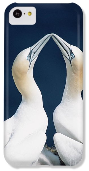 Greeting Northern Gannets Canada IPhone 5c Case by