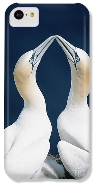 Greeting Gannets Canada IPhone 5c Case