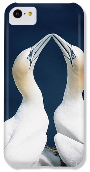 Greeting Gannets Canada IPhone 5c Case by Yva Momatiuk John Eastcott