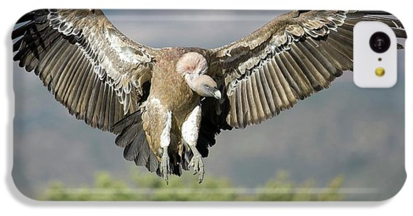 Griffon Vulture Flying IPhone 5c Case by Nicolas Reusens