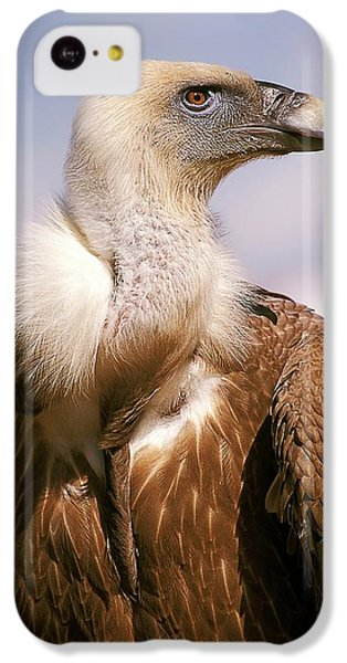 Griffon iPhone 5c Case - Griffon Vulture (gyps Fulvus) by Photostock-israel