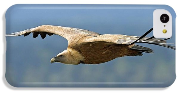 Griffon Vulture In Flight IPhone 5c Case