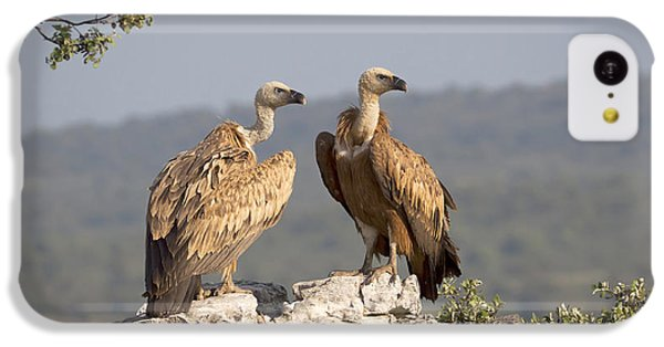 Griffon iPhone 5c Case - Griffon Vulture Pair Extremadura Spain by Gerard de Hoog