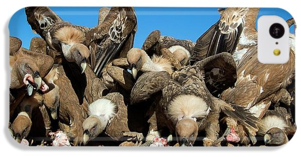 Griffon iPhone 5c Case - Griffon Vultures Feeding by Nicolas Reusens