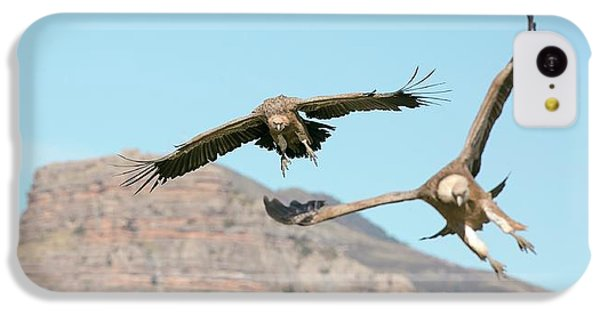 Griffon iPhone 5c Case - Griffon Vultures Flying by Nicolas Reusens