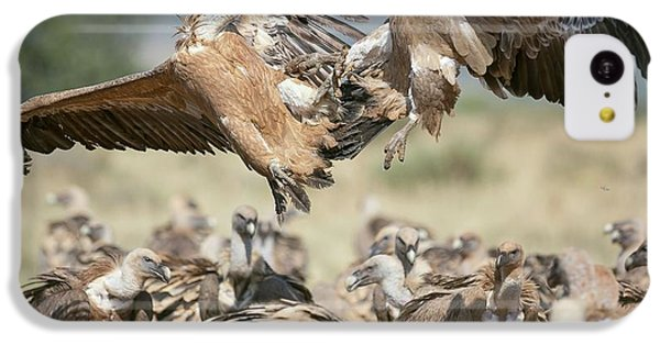 Griffon iPhone 5c Case - Griffon Vultures by Nicolas Reusens