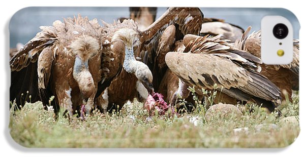 Griffon Vultures Scavenging IPhone 5c Case by Dr P. Marazzi