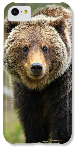 Brown Bear iPhone 5c Case - Grizzly by Stephen Stookey