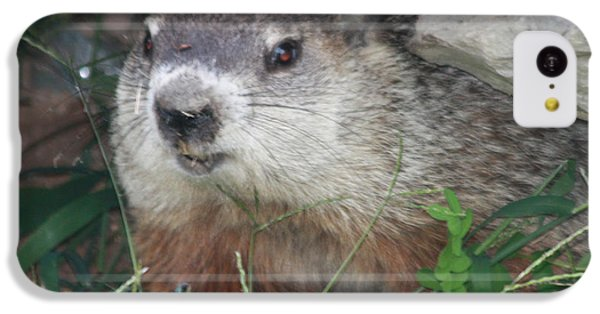 Groundhog iPhone 5c Case - Groundhog Hiding In His Cave by John Telfer