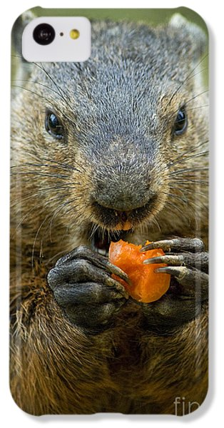 Groundhogs Favorite Snack IPhone 5c Case by Paul W Faust -  Impressions of Light