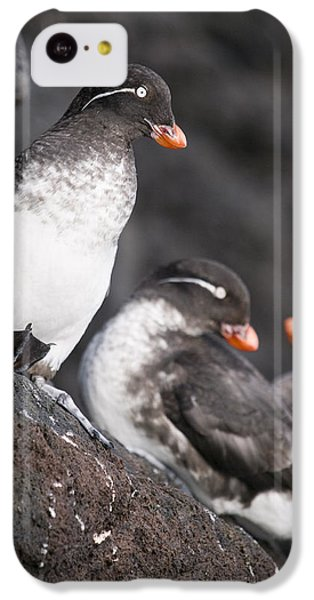 Group Of Parakeet Auklets, St. Paul IPhone 5c Case by John Gibbens