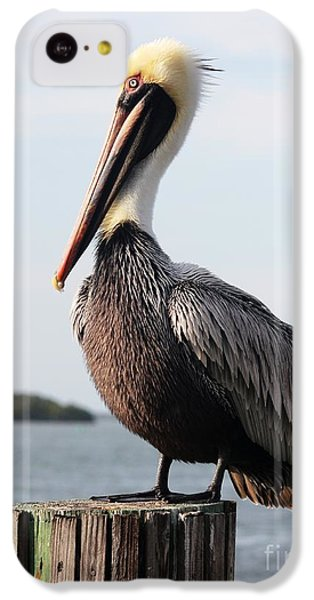 Pelican iPhone 5c Case - Handsome Brown Pelican by Carol Groenen