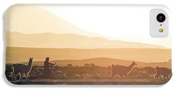 Llama iPhone 5c Case - Herd Of Llamas Lama Glama In A Desert by Panoramic Images