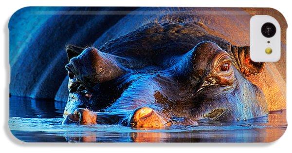 Hippopotamus  At Sunset IPhone 5c Case