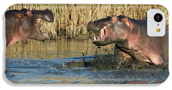 Hippopotamus Confrontation IPhone 5c Case by Tony Camacho