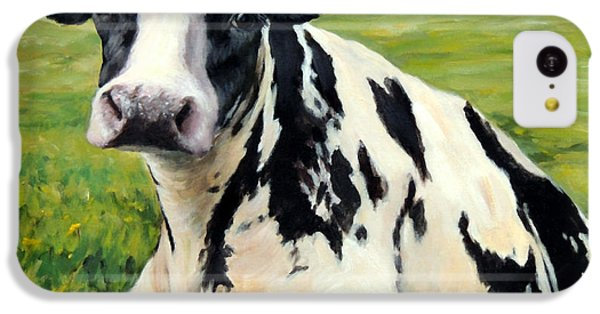 Cow iPhone 5c Case - Holstein Cow Relaxing In Field by Dottie Dracos