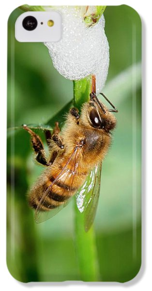 Cuckoo iPhone 5c Case - Honey Bee Drinking From Cuckoo-spit by Dr. John Brackenbury