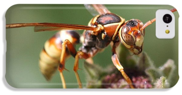 IPhone 5c Case featuring the photograph Hornet On Flower by Nathan Rupert