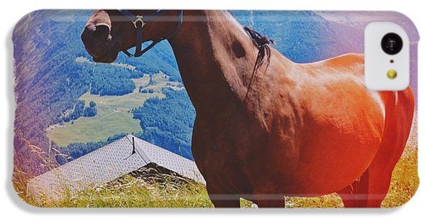 Horse In The Alps IPhone 5c Case