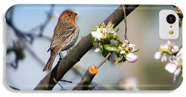 Finch iPhone 5c Case - House Finch by Mike Dawson