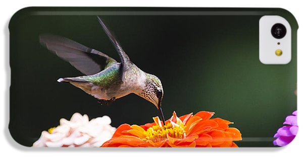 Hummingbird In Flight With Orange Zinnia Flower IPhone 5c Case