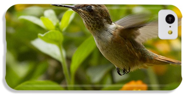 Hummingbird Looking For Food IPhone 5c Case