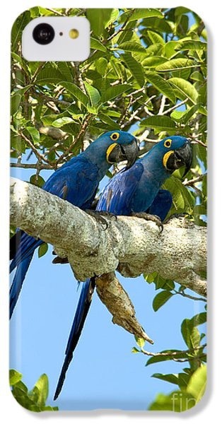 Hyacinth Macaws Brazil IPhone 5c Case by Gregory G Dimijian MD